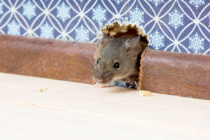 getting rid of mice and rats