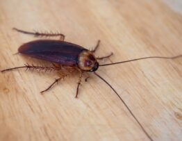 can cockroach bite