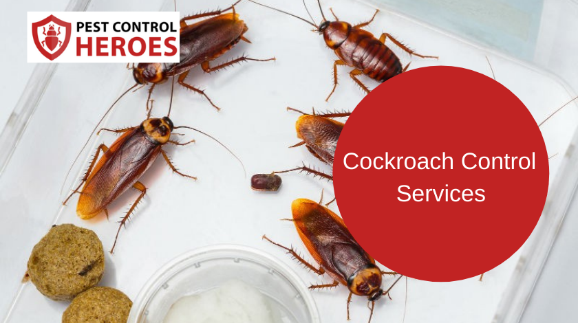 cockroach control banner image